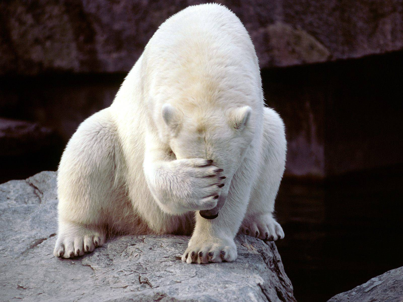POlar_facepalm